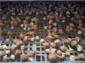 莆田巴西菇
