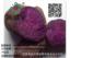 脱毒紫薯苗