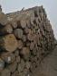 白松原木木方